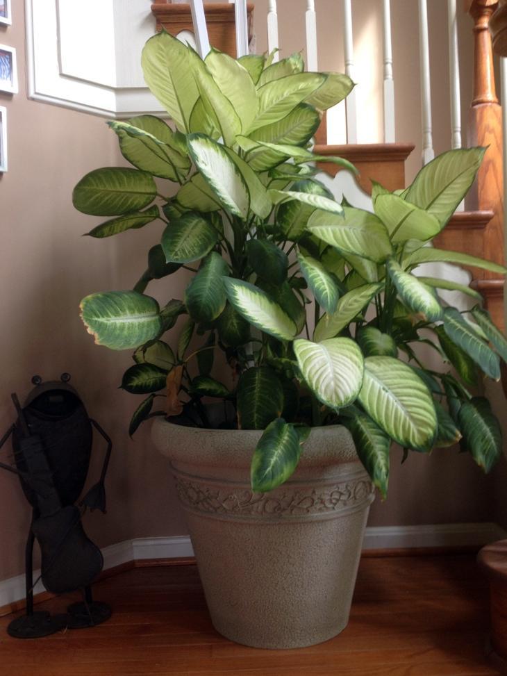 Photos Of Tropical Plants House Plants