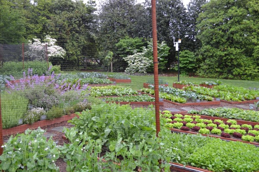 Whitehouse Vegetable Garden Photos