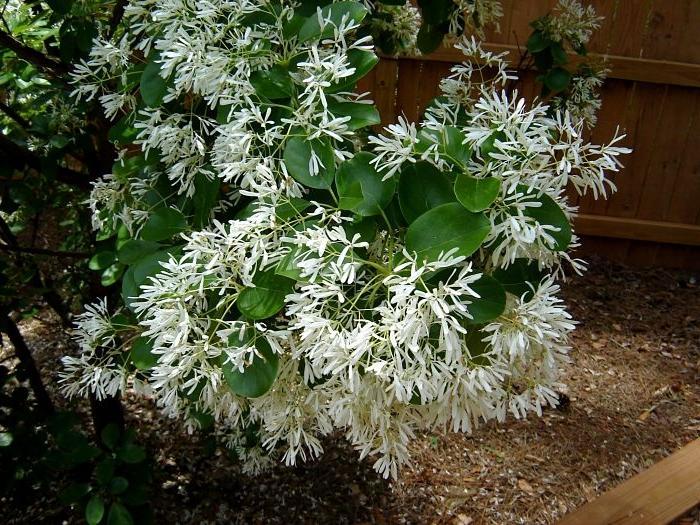 White Flower Photography Marietta Ga