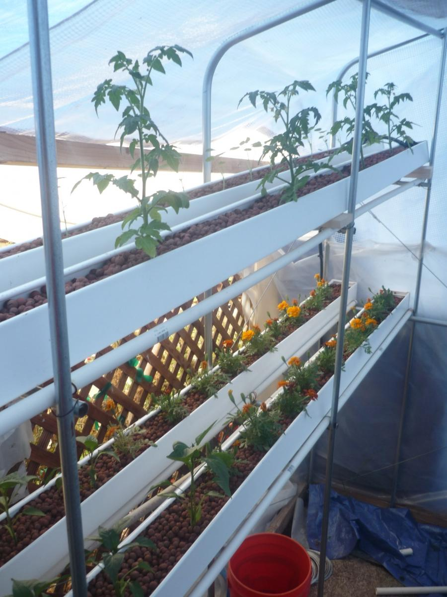 Rain gutter garden photos for Aquaponic source