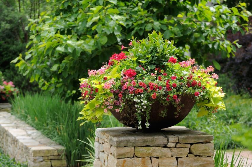 Outdoor Flower Pot Arrangement Photos
