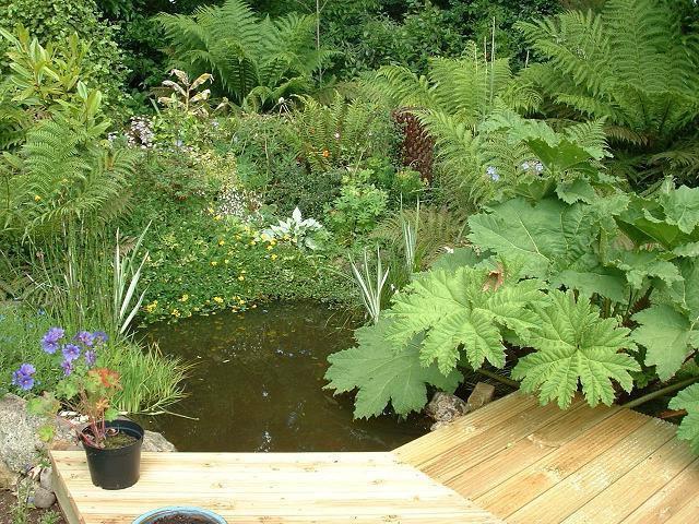 Garden pond photo for Garden pond kent