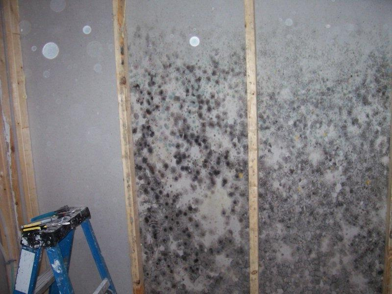 Drywall Mold Photos