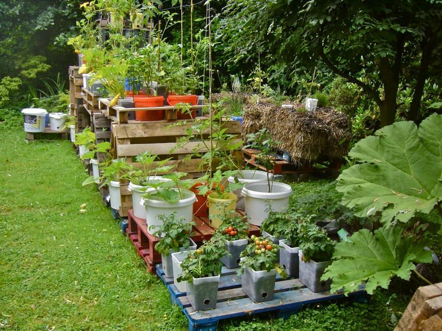 Дизайн и интерьер сада и огорода