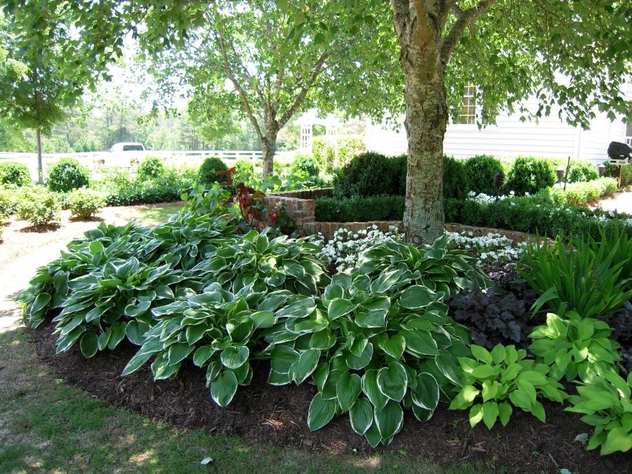 Shade Garden Design Photos