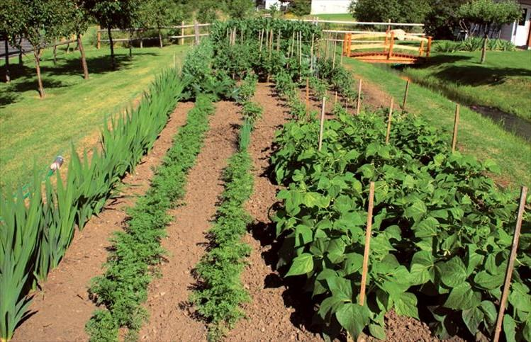 Beautiful vegetable garden photos for Beautiful vegetable garden designs