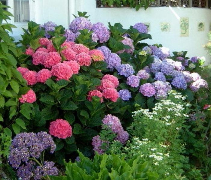 Identify Flowers By Photo