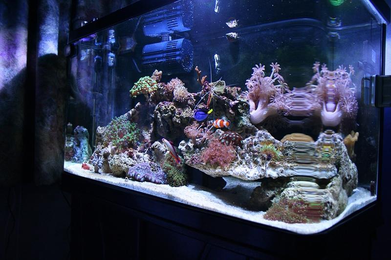Tropical fish tank maintenance deals 2017 fish tank for Fish tank deals