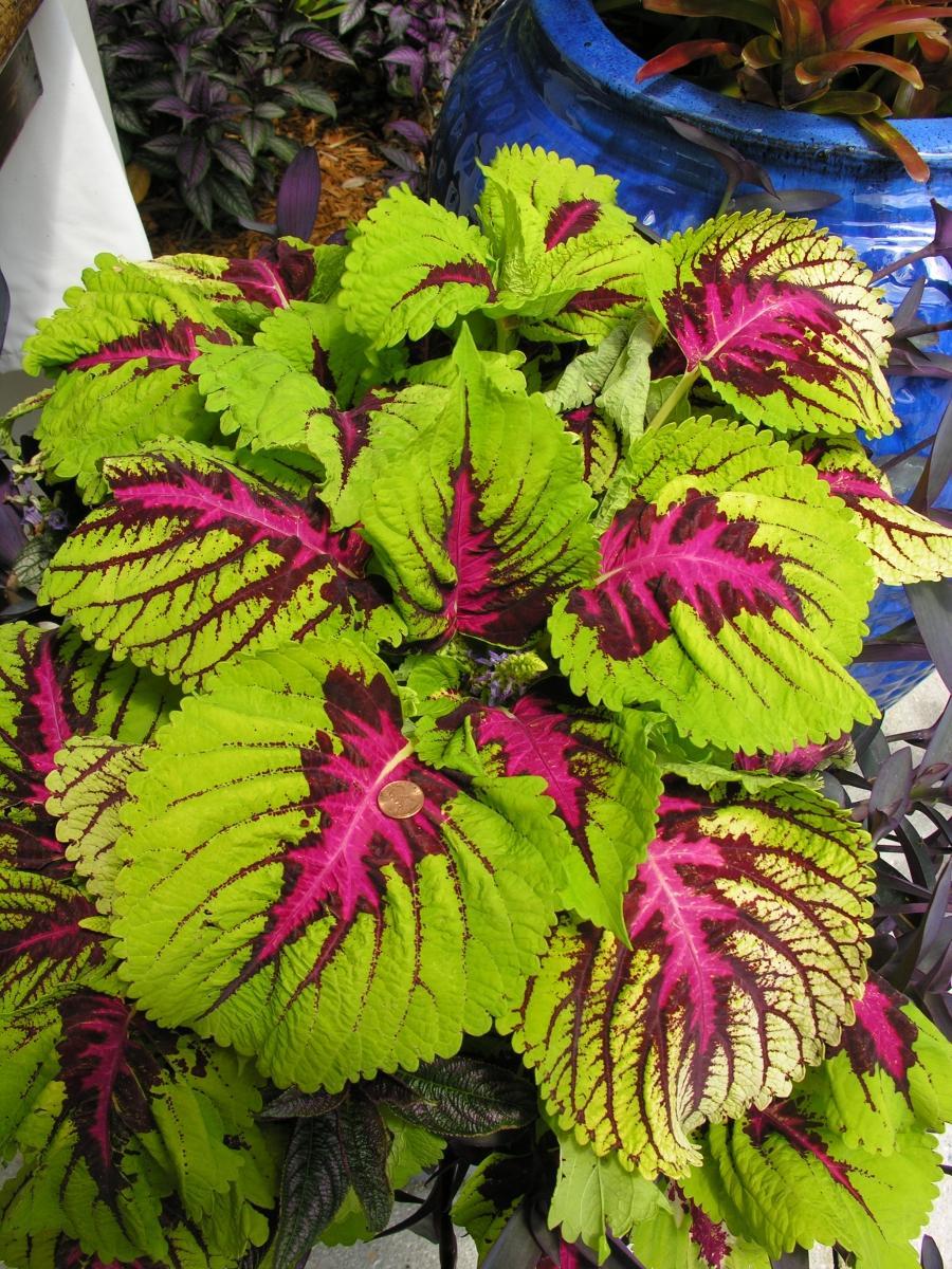 Горшечные цветы название всех цветов и фото