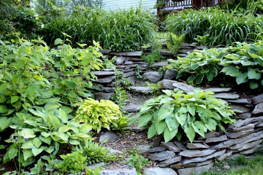 Terraced rock garden photos for Terrace vegetable garden kerala