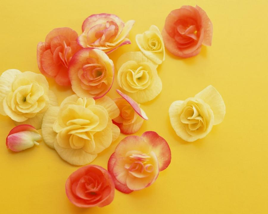 Flower Art - Art Flowers Photos - Flower Photography 1280*1024...