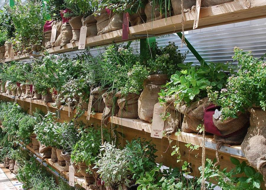 Herb and vegetable garden photos for Vegetable herb garden design