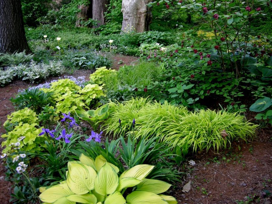 Woodland garden photos for Garden designs for shade