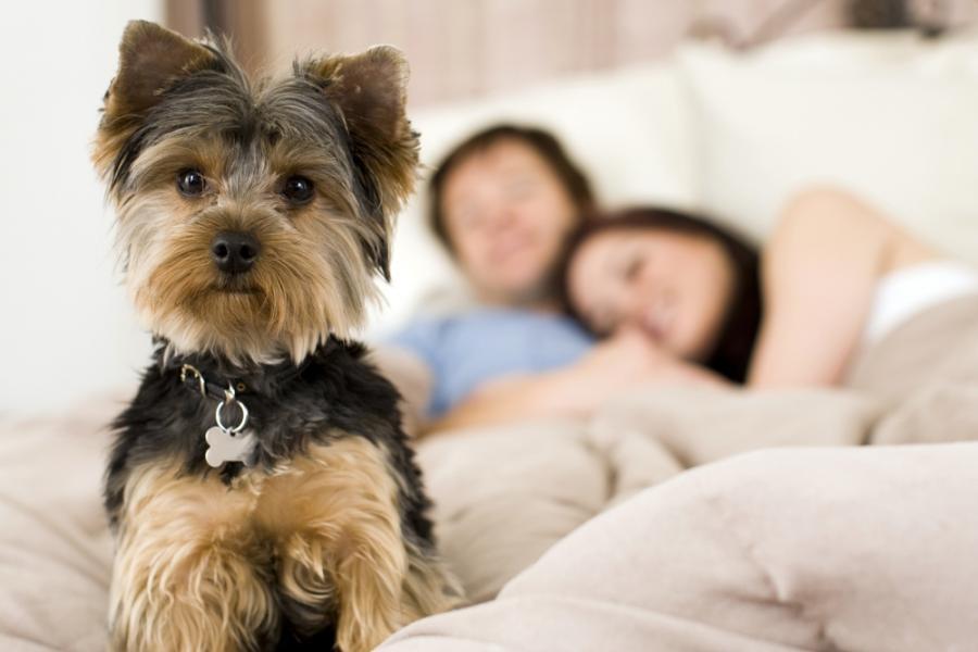 средние собаки для квартиры с фото