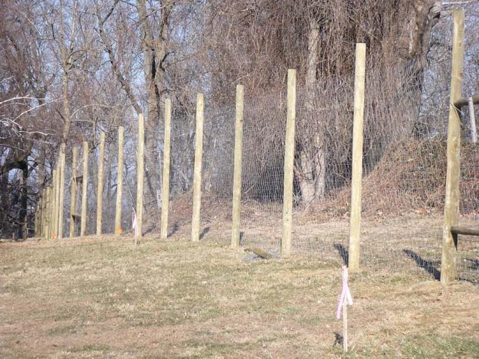 Deer Fence Photos