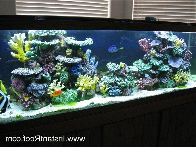 A saltwater fish store is unique in the fact that it is the...