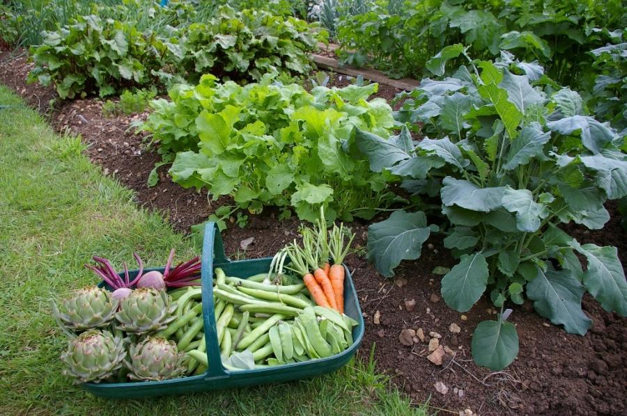 Какие овощи можно выращивать в тени?