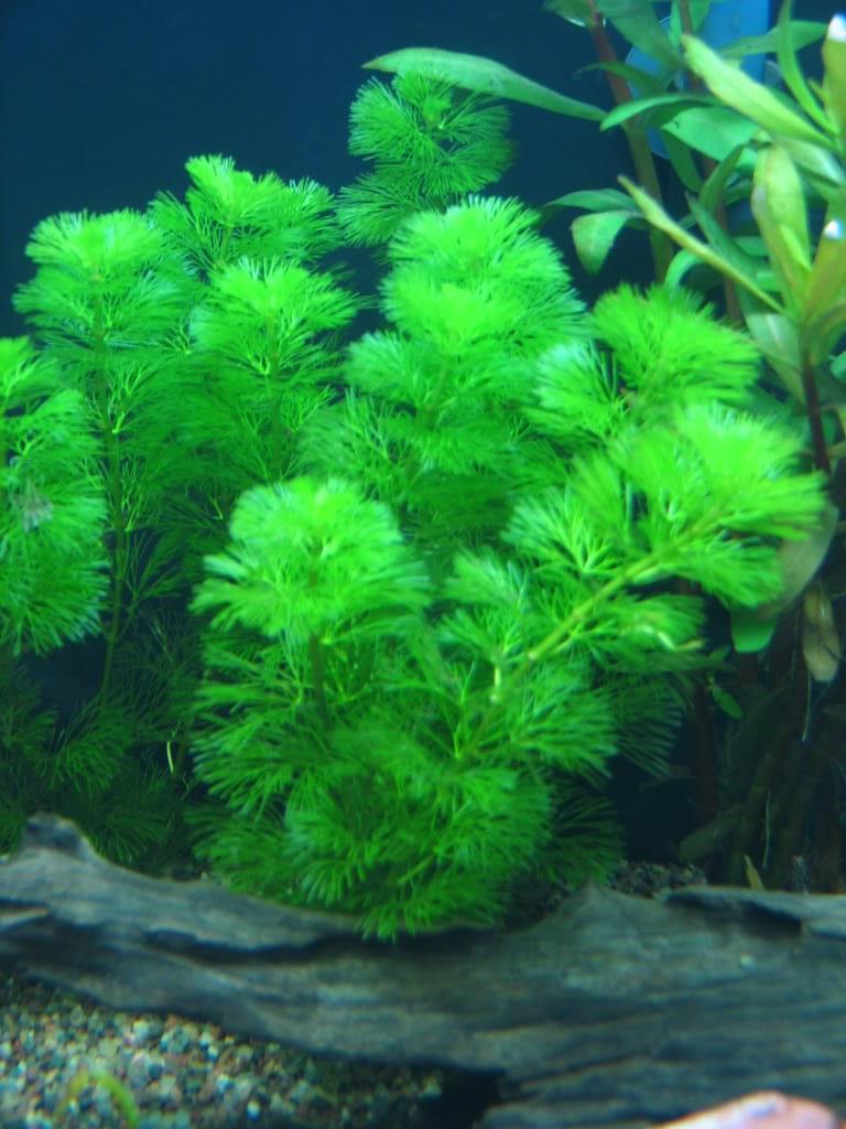 Aquarium Plant Species Photos