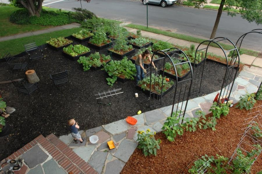 Photos of front yard vegetable gardens - Front yard vegetable garden ideas ...