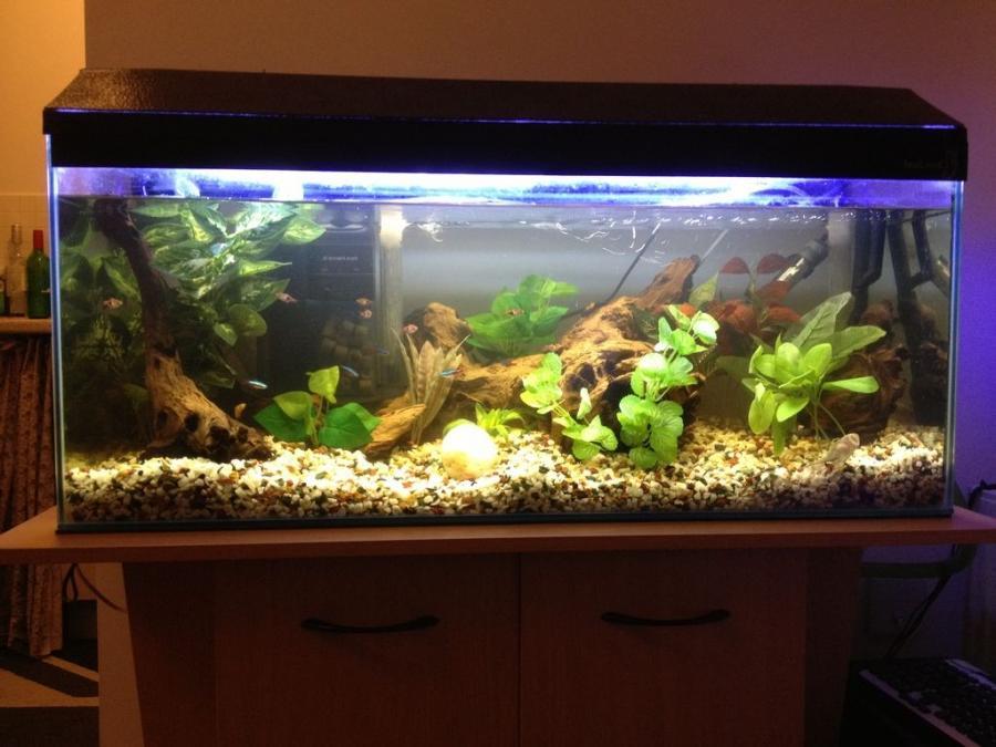 Tropical fish aquarium photos for Fish tank fireplace