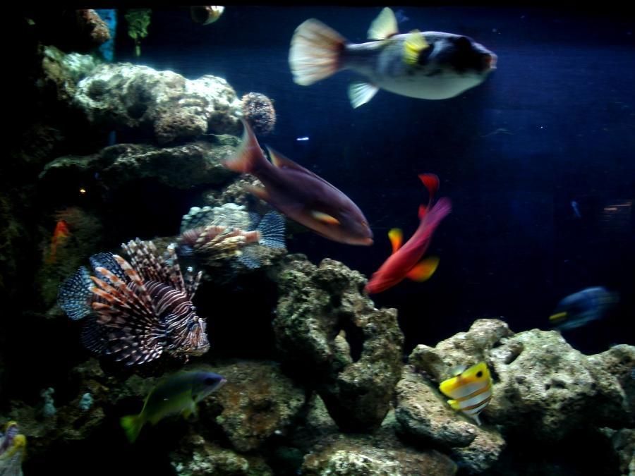 Saltwater Fish Keep Dying Saltwater Aquarium Advice