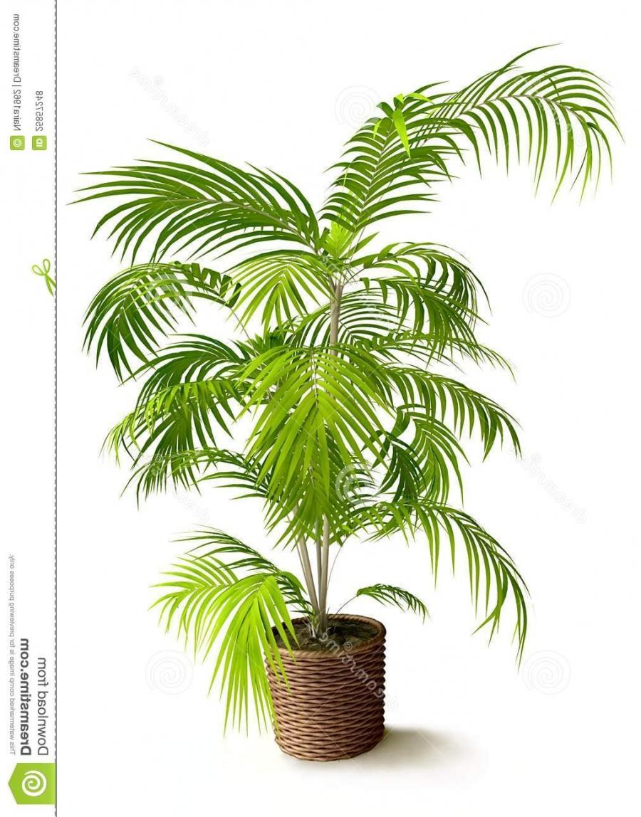 Tropical House Plant Photo