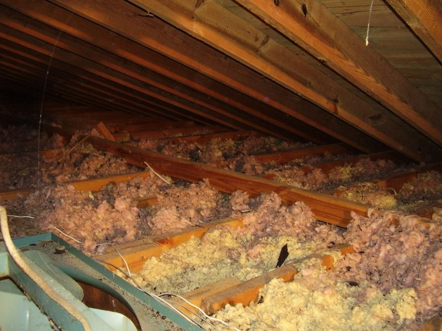 Had critters in your attic? Chances are they have contaminated...