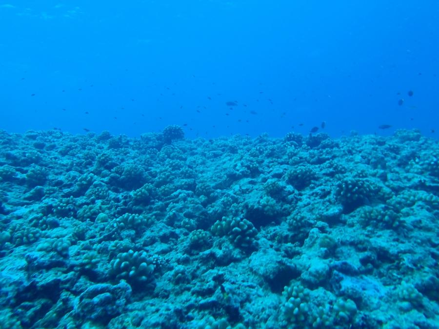 So hereu an idea of what the fore-reef looks like. Itu very blue!...