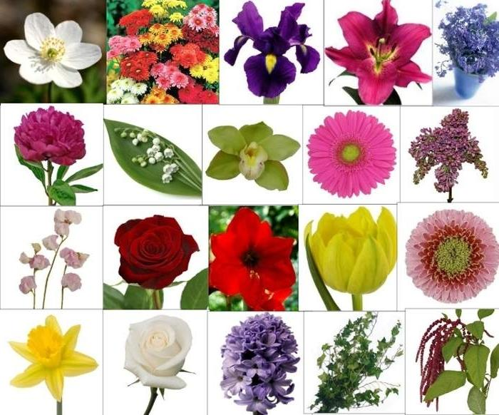Types of flowers names and photos for Kinds of flowers with name and picture