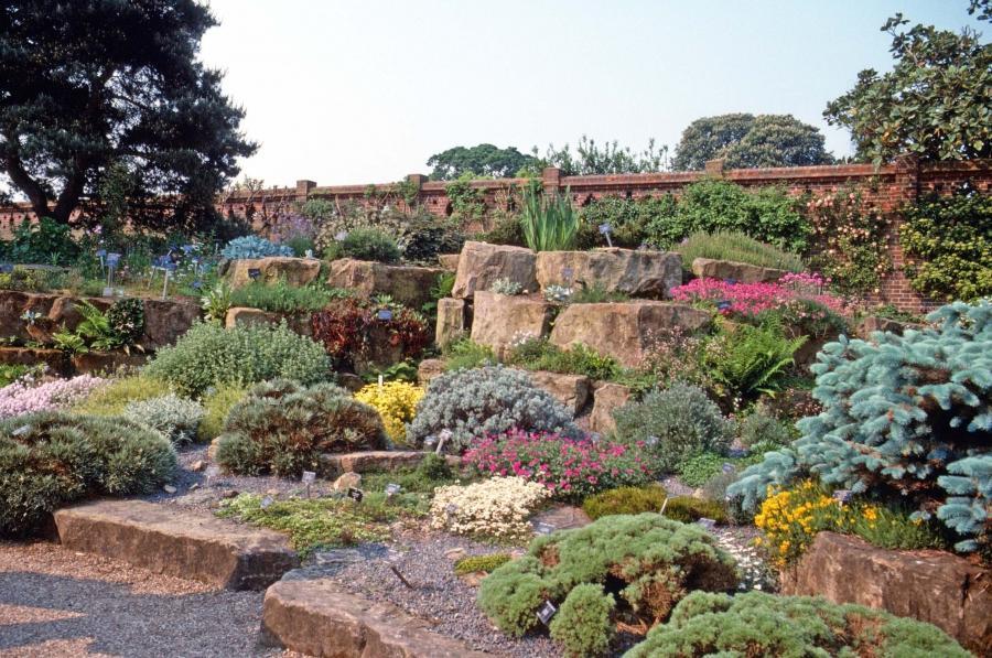 Succulent rock garden photos for Creating a rock garden