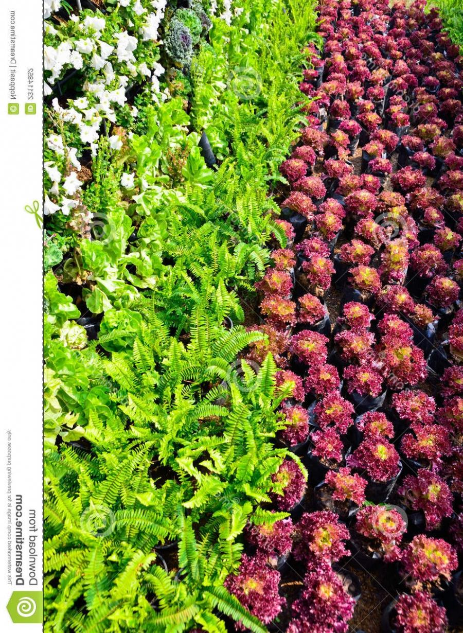 Photos of beautiful vegetable gardens for Beautiful vegetables