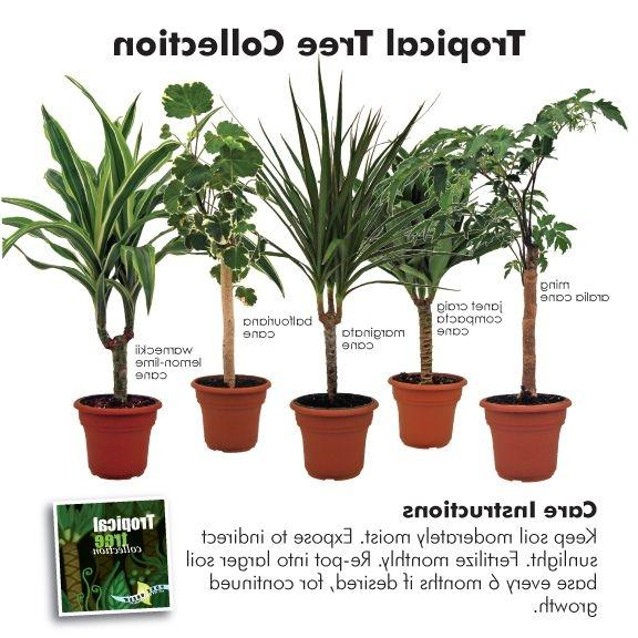 House plant names and photos - Indoor plant name ...