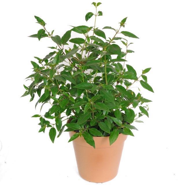 Hardy House Plants Photos