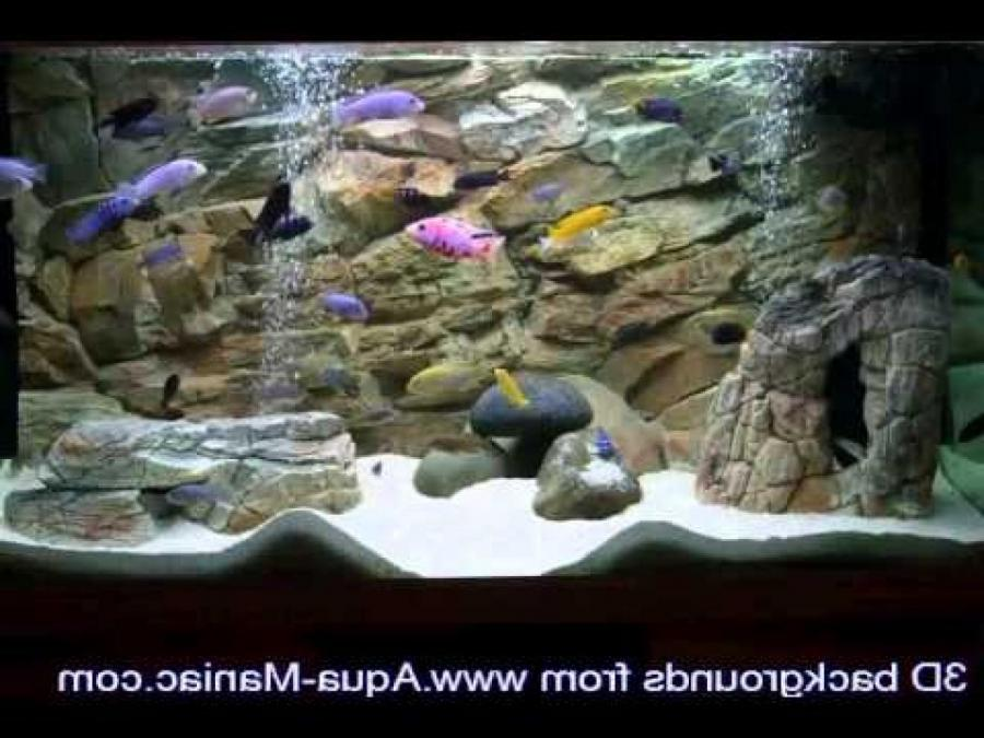 Best Aquarium Photos