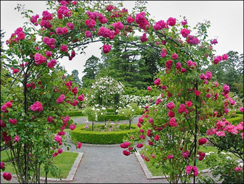 Beautiful rose gardens photos for Garden design with roses
