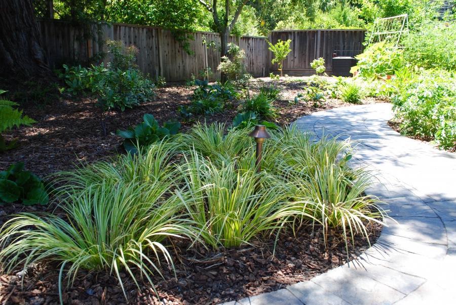 Native Shade Garden Landscape Design U2013 Izvipi.com