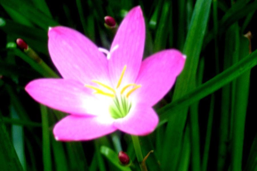 Colitas Flower Photo