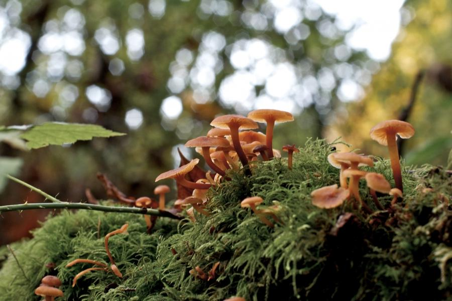 This entry was posted in Photography and tagged Fall, Fungi,...