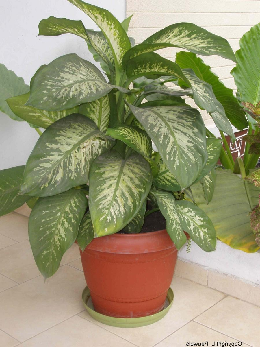 common tropical house plant identification identifying houseplants related keywords identifying houseplants keywords keywordsking