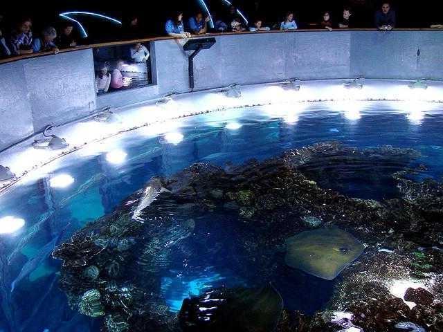 Boston Ma Aquarium Photos