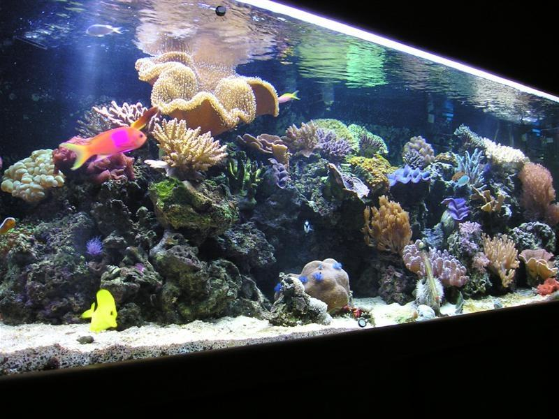 Looking for the right size of saltwater Aquarium West Palm Beach...