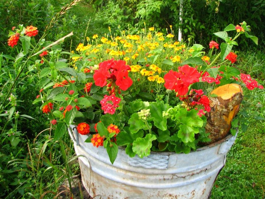 Photos container flowers - Best flower combinations for containers ...