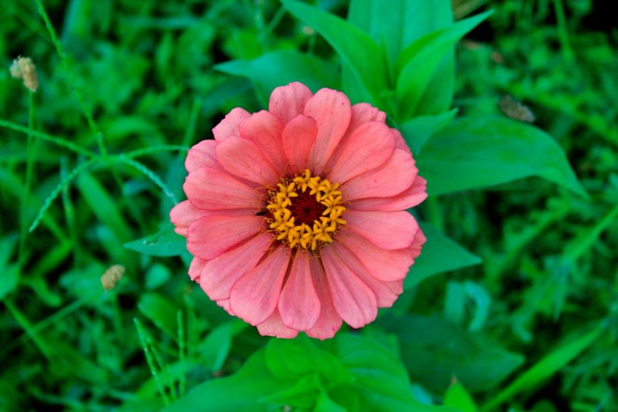 Different Types Of Flowers Photos