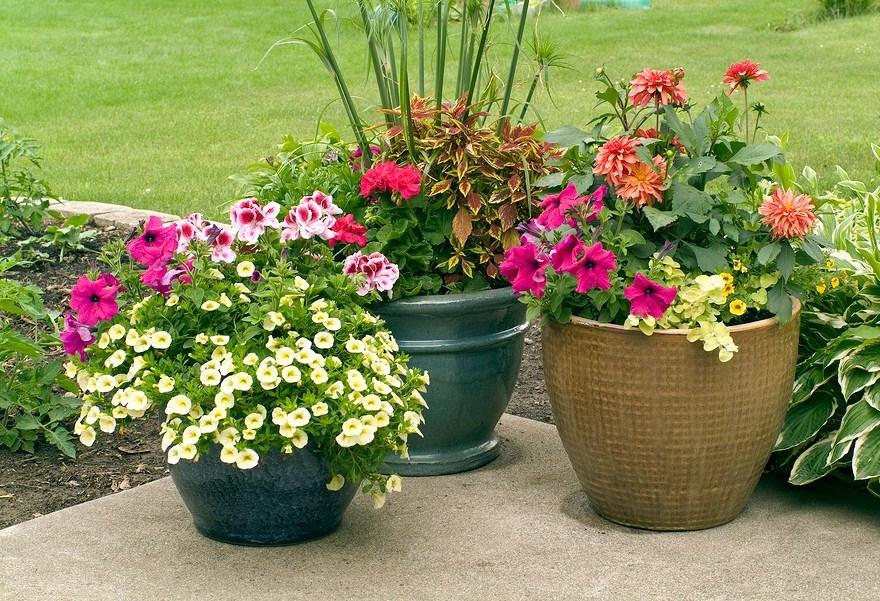 outdoor flower pot arrangement photos