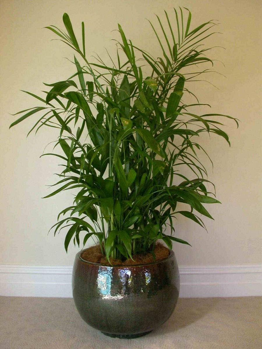 House plants photos names - House plants names and pictures ...