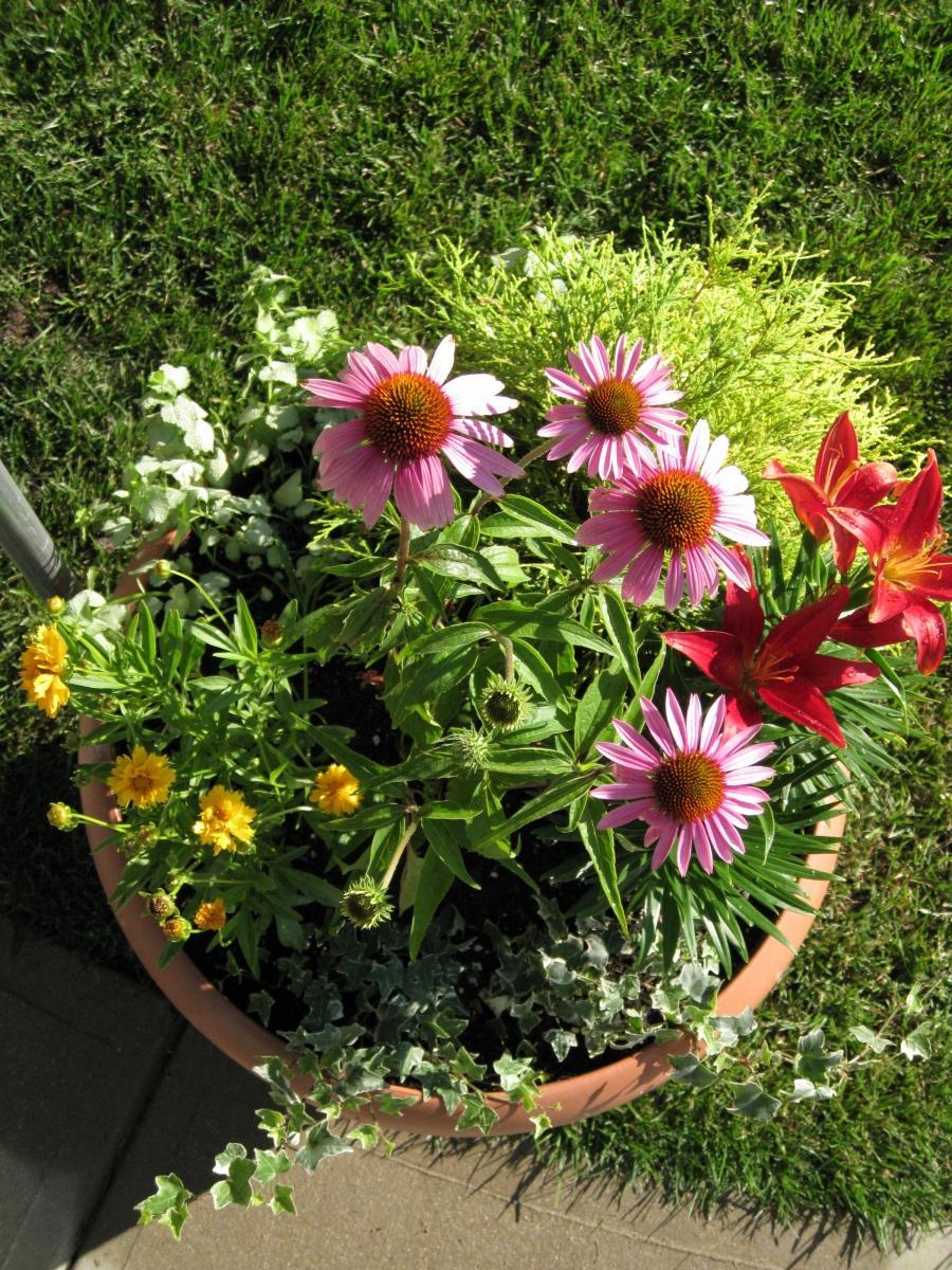 Funky Garden Ideas Photos