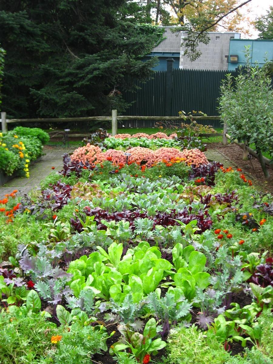 Garden photo vegetable