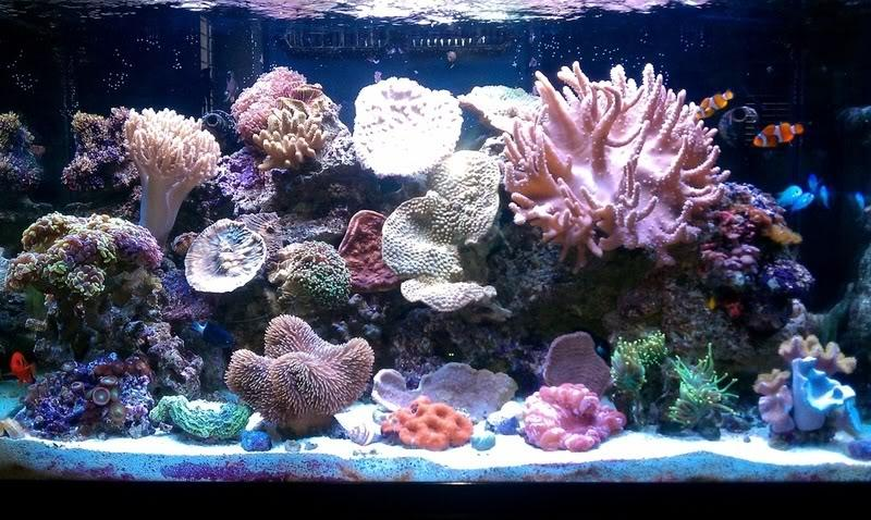 ... I have a substantial interests in saltwater aquariums and...