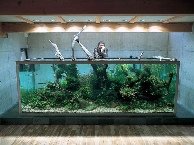 Aquarium Design Ideas Photos