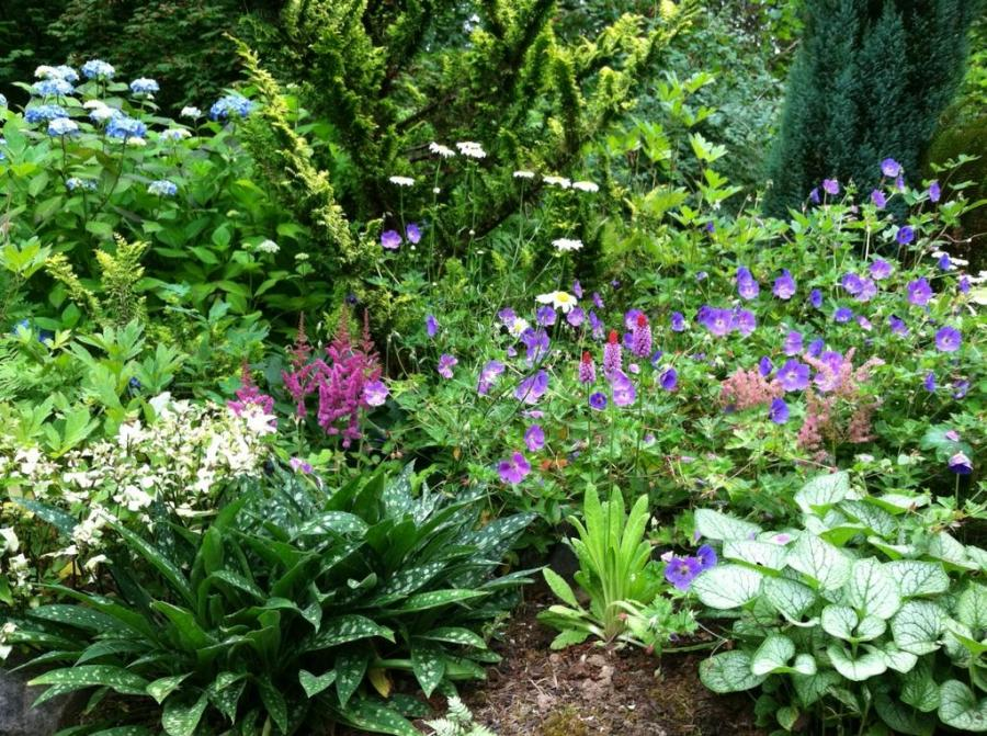 Shade garden by Perennial Passions garden design and landscaping